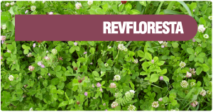 REVFLORESTA